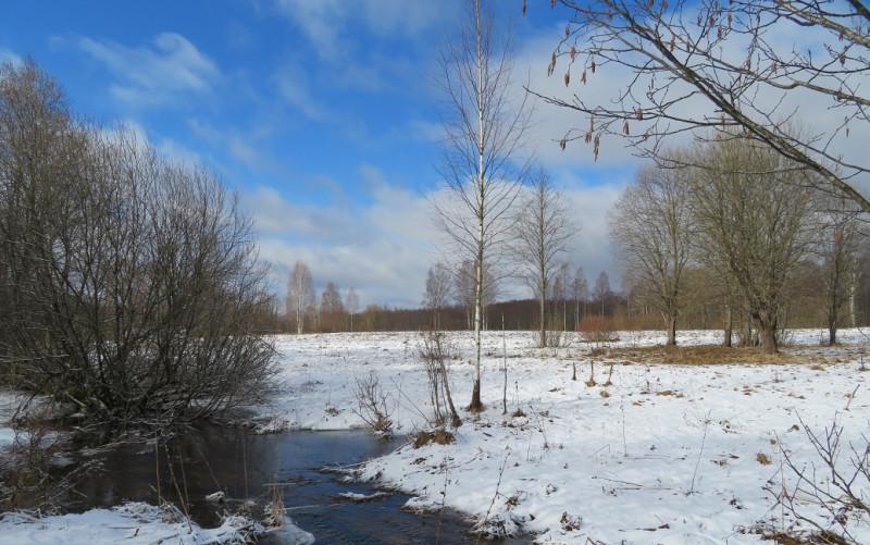 Снег с полей еще не сошел, но в рощице его уже нет. Ручьи многоводны. Ольха в цвету.