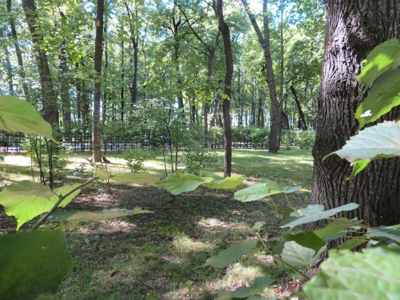 Шпалеры предотвратили вытаптывание газонов, что позволяет сформироваться подлеску