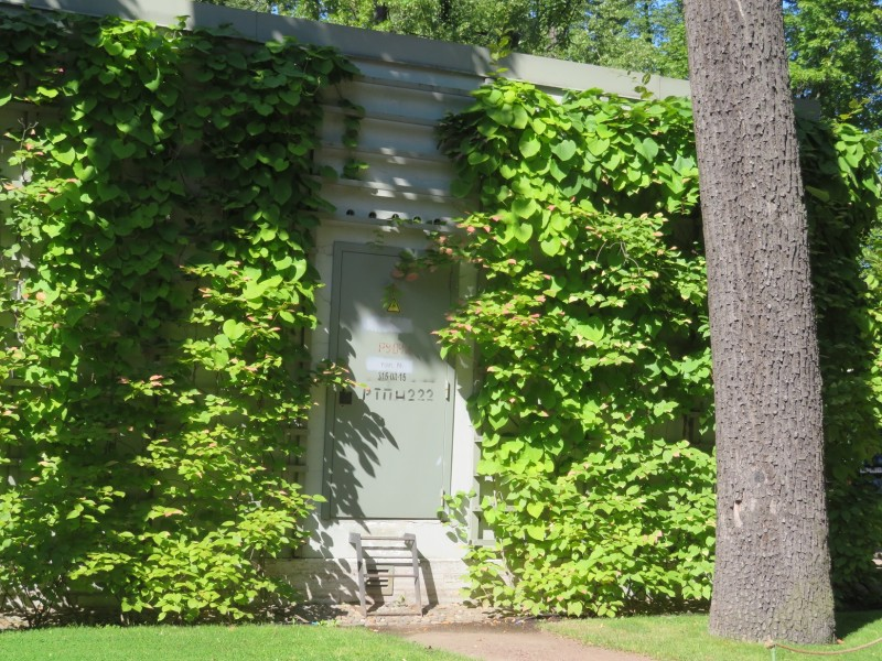 Хозяйственная постройка скрыта за вьющимися по стене растениями.