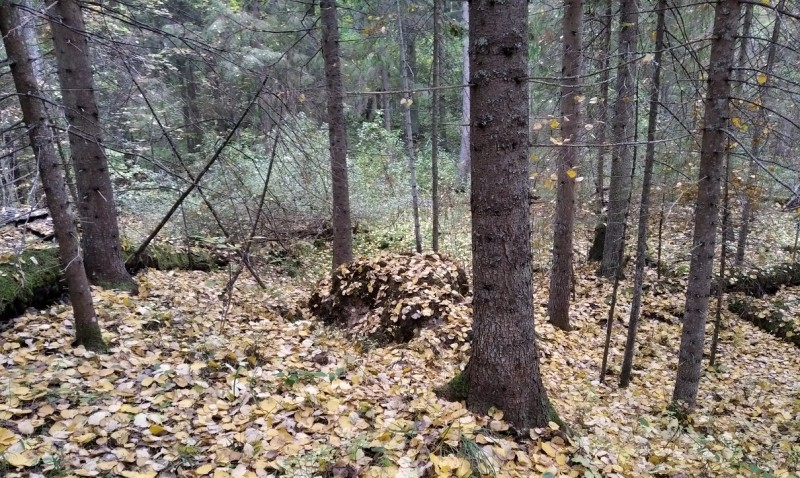 В начале октября листопад преобразил подлесок