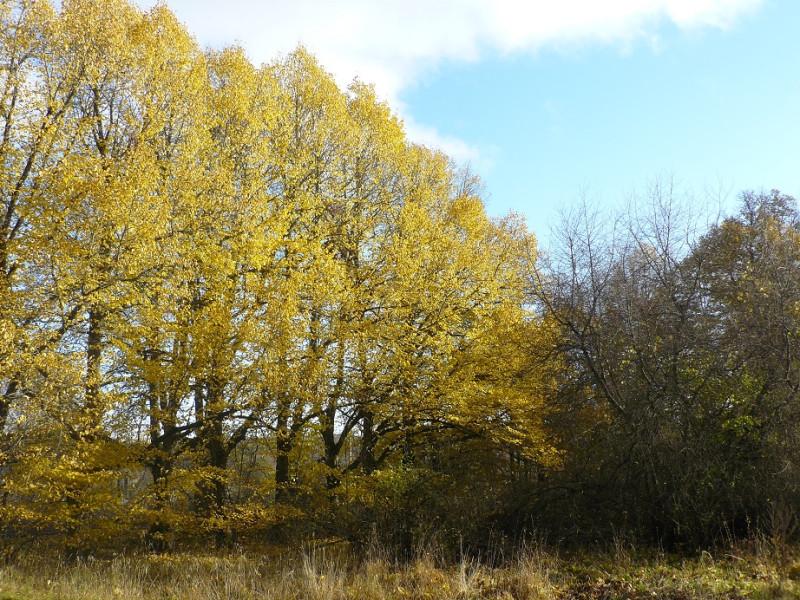 Столетние липы парка - свидетели расцвета и упадка графской усадьбы