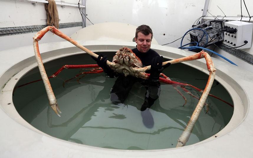 huge-crab_2513536k
