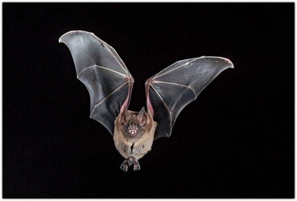 Летучие мыши невероятные фото