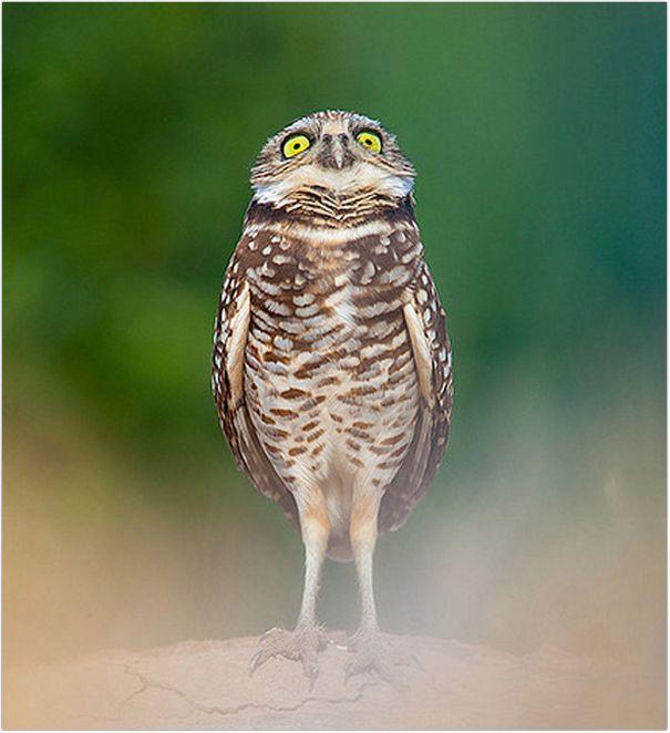 фото смешные сов