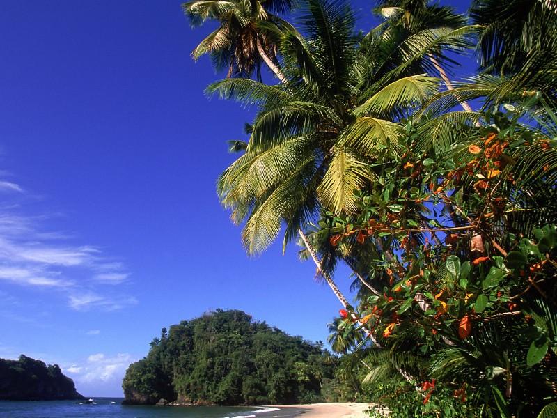картинки райских уголков на телефон красивые оранжевый