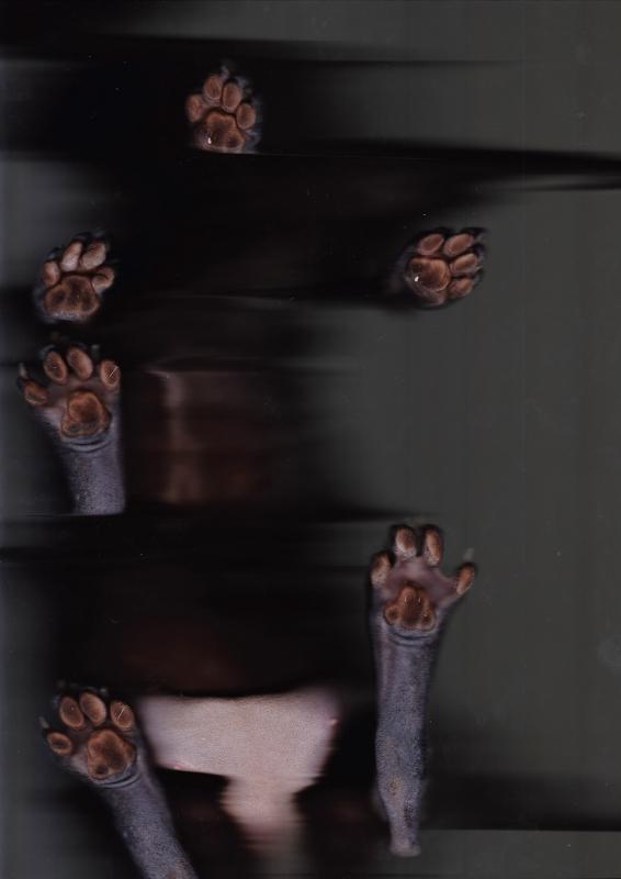 Скан кошки
