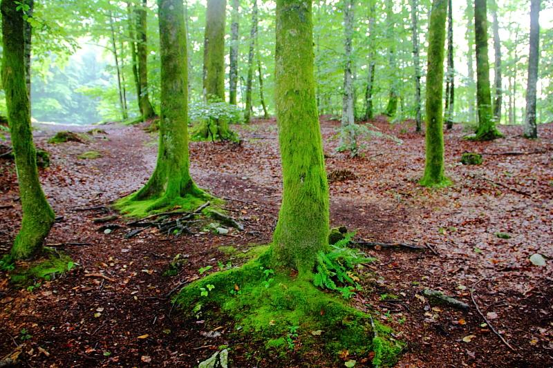 13 лес