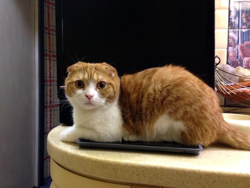 3D котик