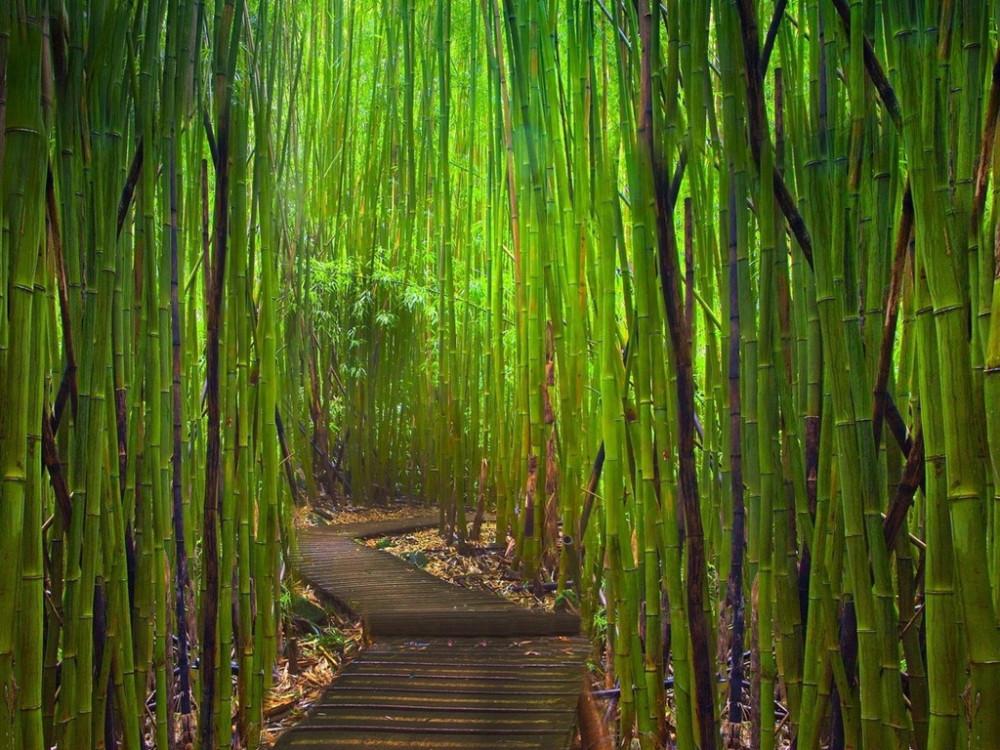 Секс в бамбуковой роще