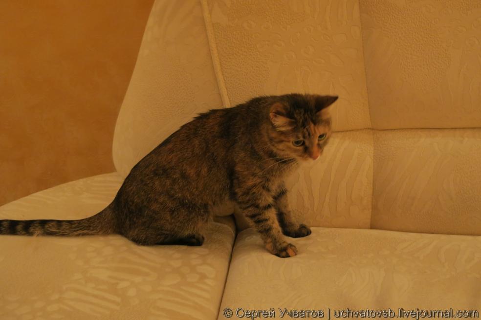 {kitford и кот}-43