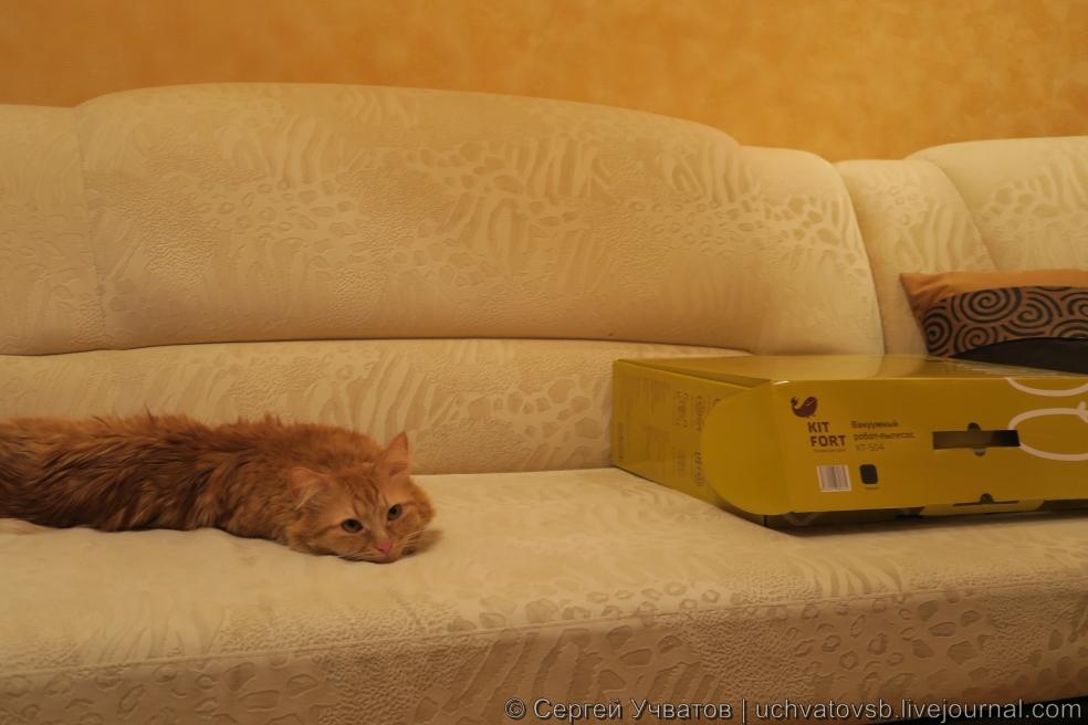 {kitford и кот}-80