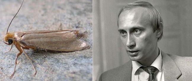 Путин о Сенцове: Чем он отличается от кадрового сотрудника разведки? - Цензор.НЕТ 7636