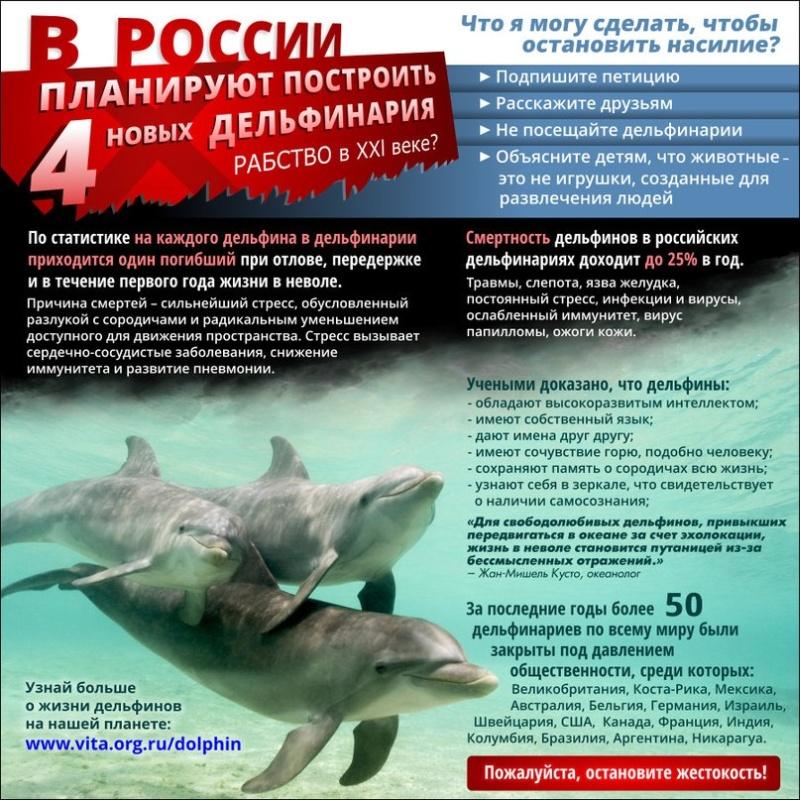 delfinam-svobodu