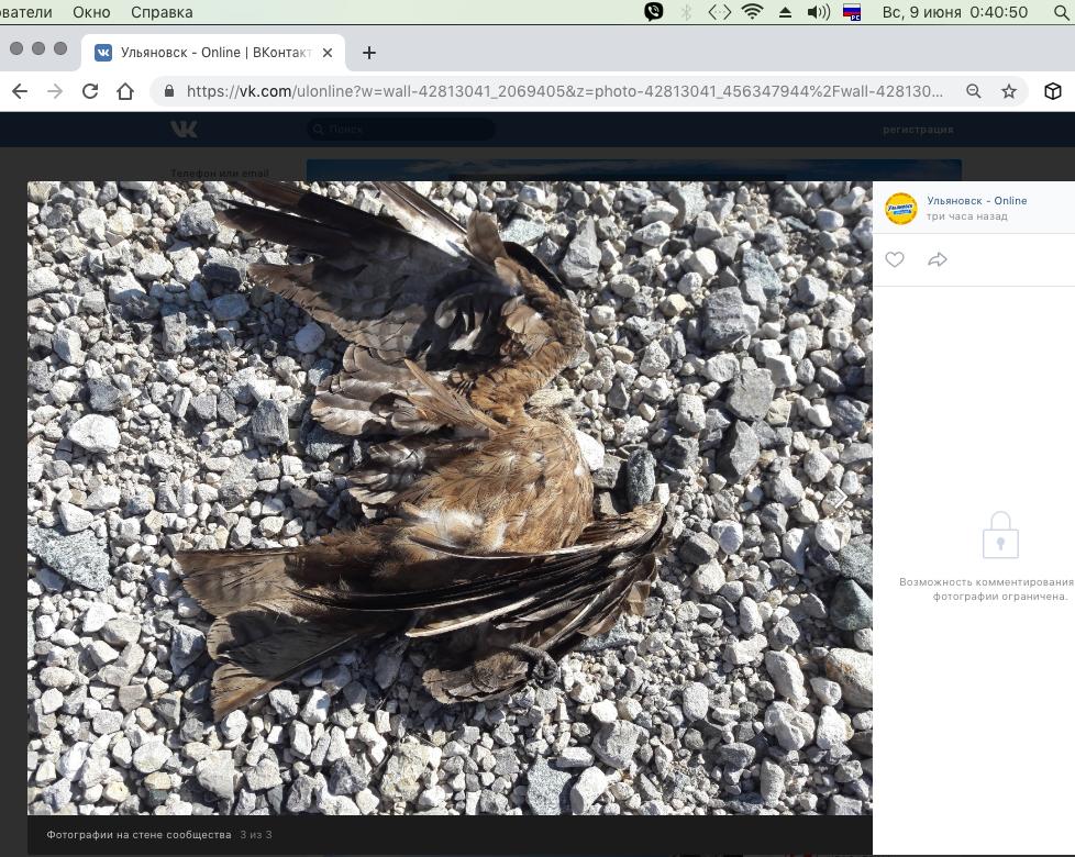 Снимок экрана 2019-06-09 в 0.40.46.png