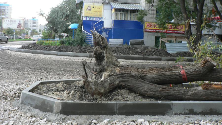 спартак_снесенное дерево 260913_1