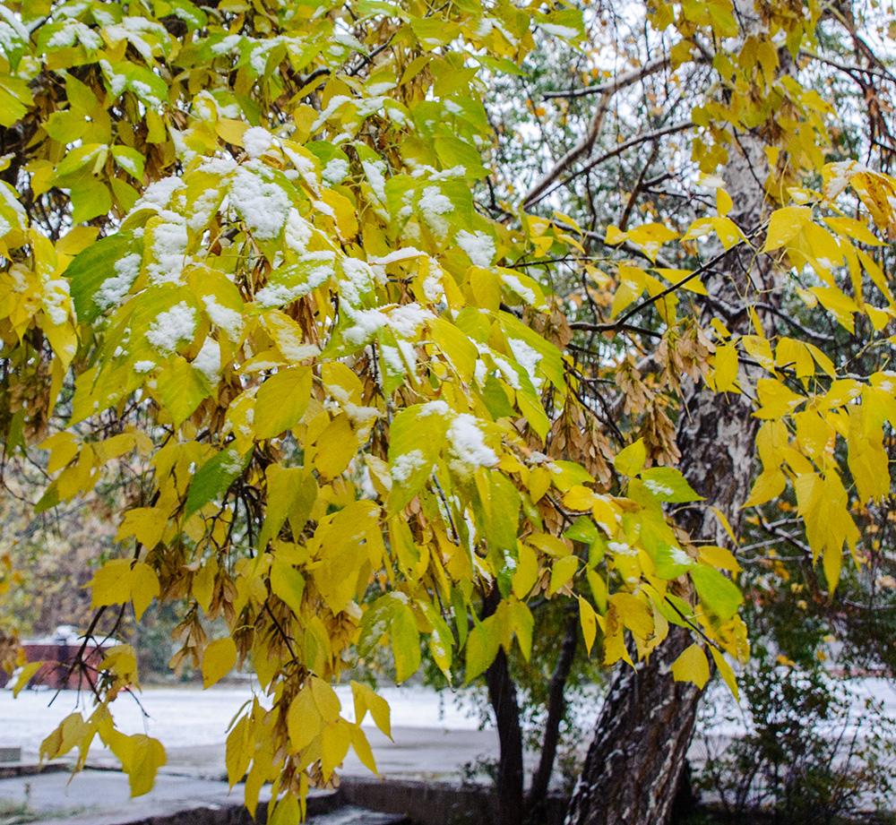 Снег в октябре