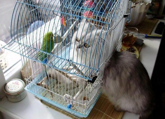 Открытки, смешные картинки про попугая с надписями