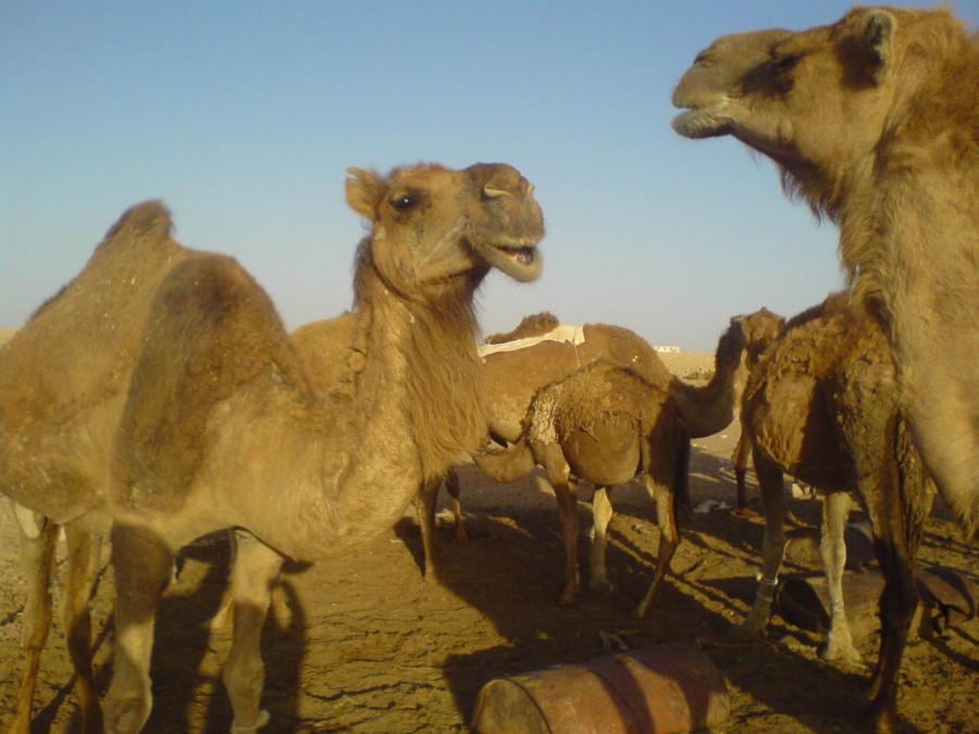 вербл2