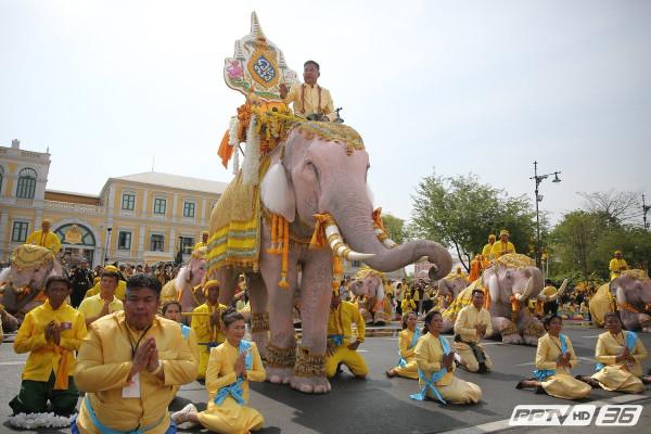слоны-02