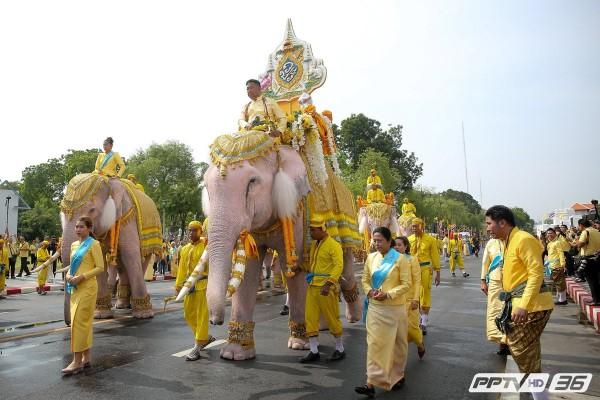 слоны-03