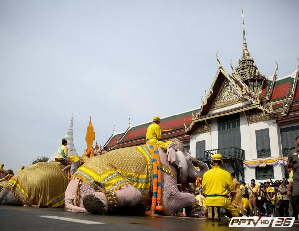 слоны-04
