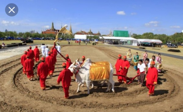 Ploughing Ceremony-10