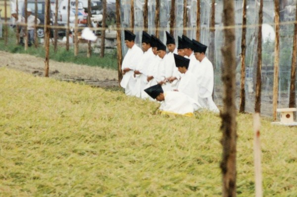 rice harvest ritual ahead of Daijosai in 1990