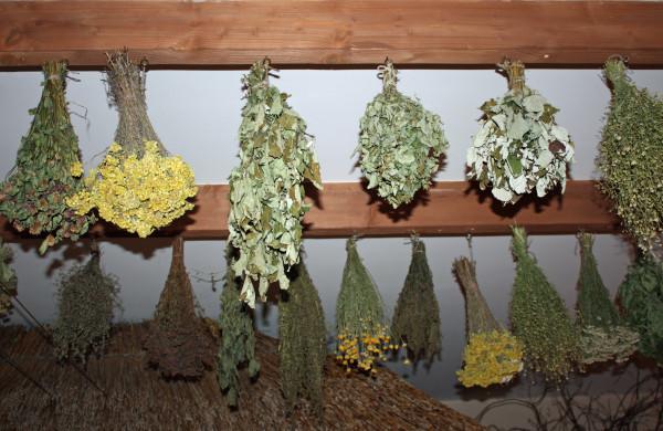 Лекарственные травы после заготовки