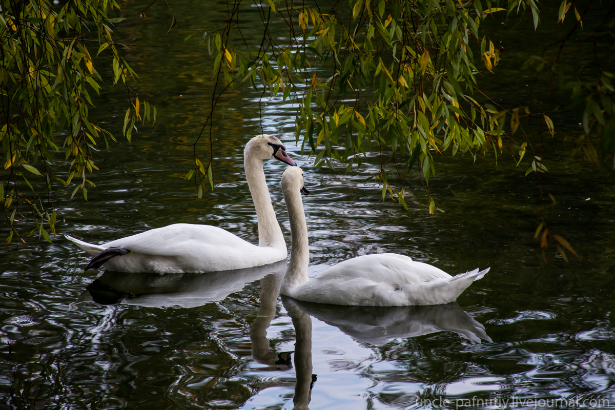 Птички парами DSC_2046.jpg