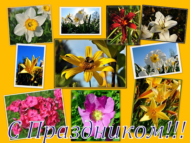 цветы 08