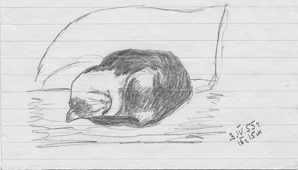 Кот в сапогах и все-все-все