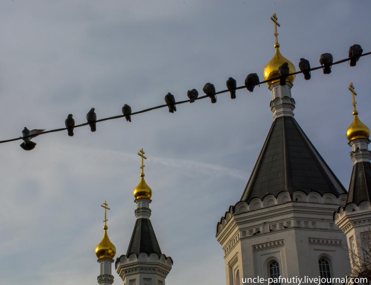 Голуби у храма