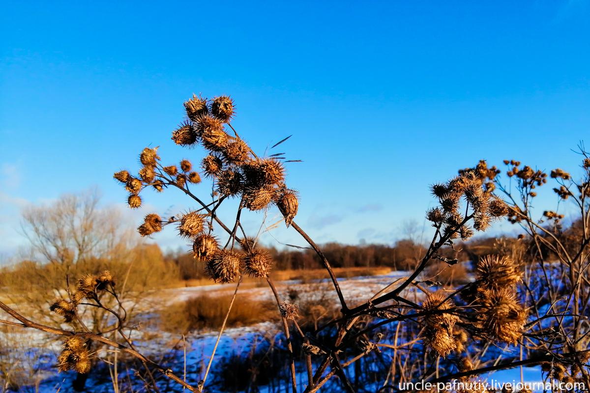 Зимние травы