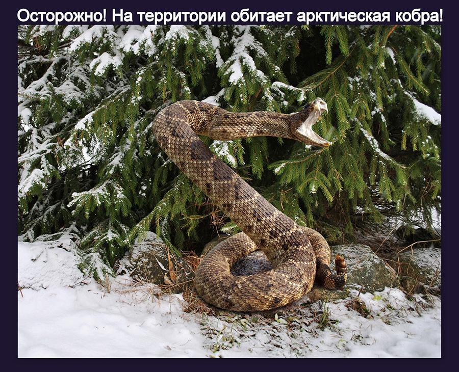 Змея-100.jpg