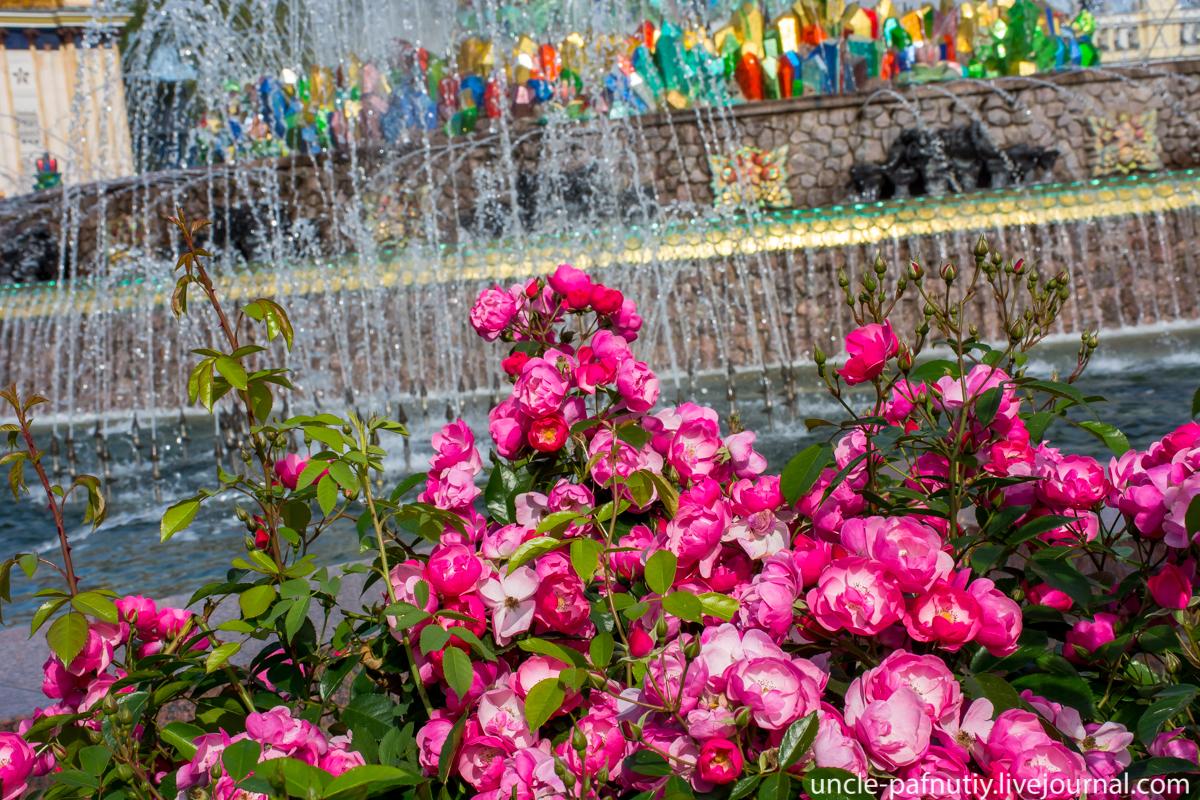 Розы у фонтана
