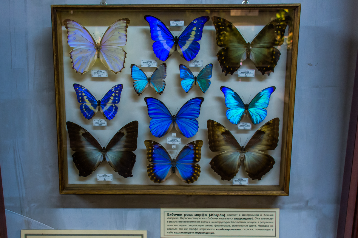 Экспозиция Эстетика и богатство мира насекомых