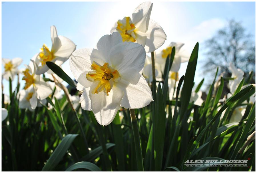 цветок6