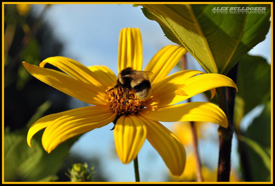 цветок10