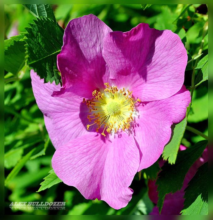 цветок14