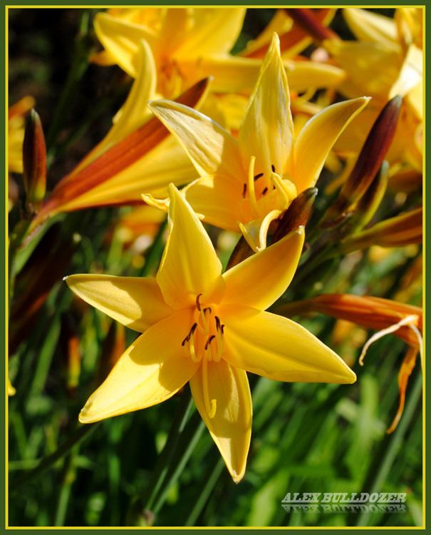 цветок16