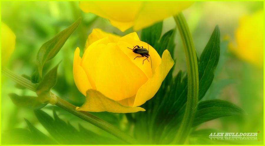 цветок18