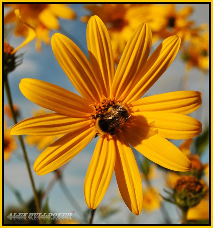 цветок19
