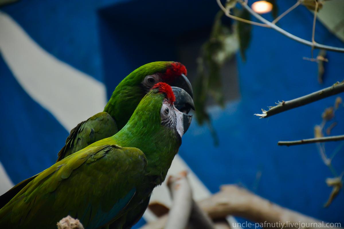 Птички парами DSC_8294.jpg