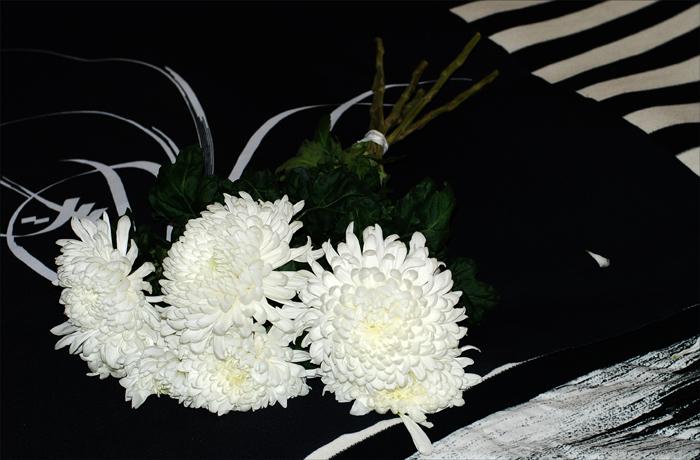 crysanthemes