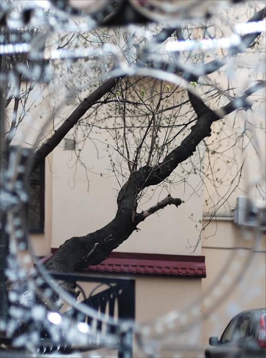 tree_inet