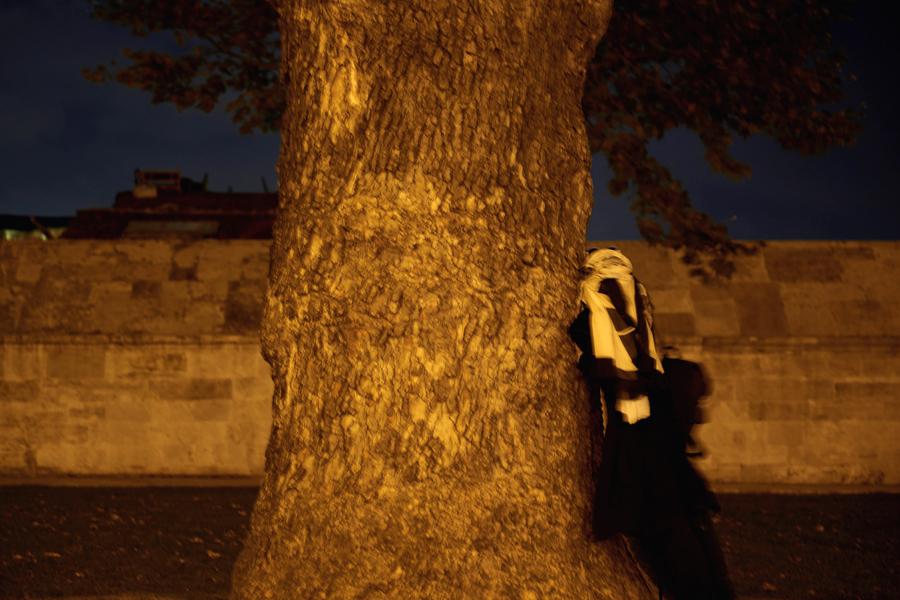 the_tree_inet