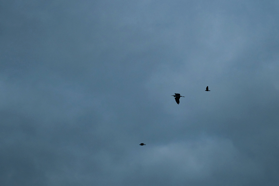3birds_inet