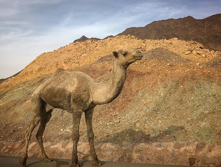 camelspirit_lj