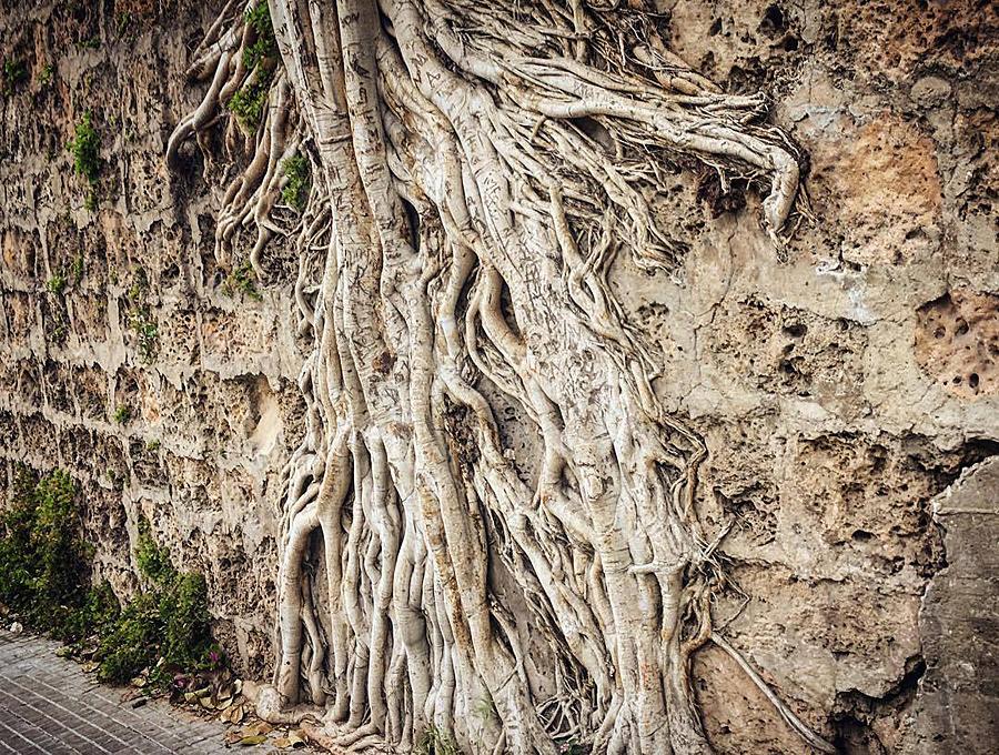 roots1_lj