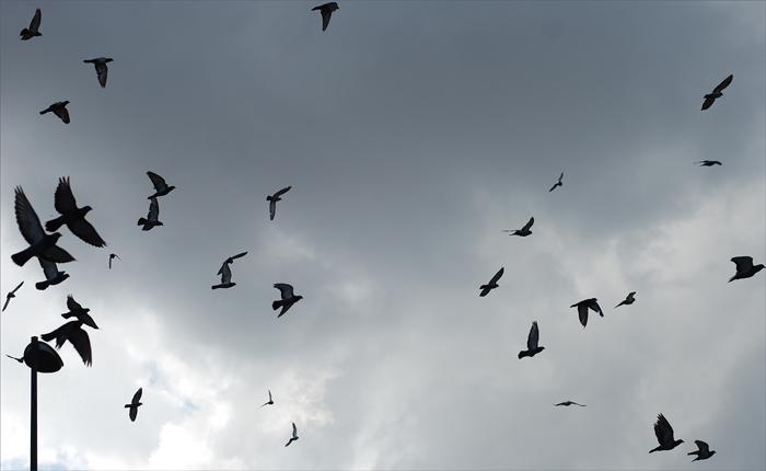 pticy_galat2